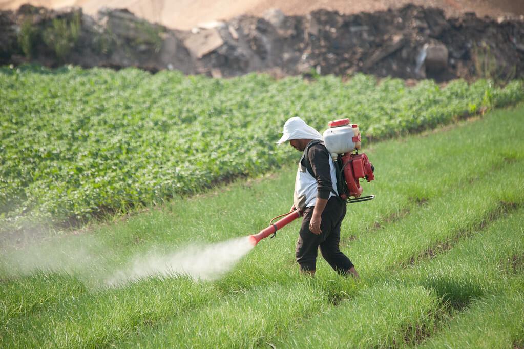 Lavoratore agricolo che utilizza dei pesticidi dopo aver conseguito il patentino fitosanitario